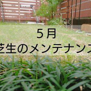 芝生のメンテナンス 南庭編
