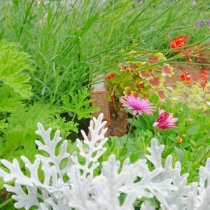 梅雨入り前の庭