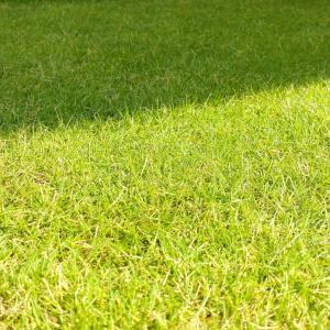 真夏の芝刈り