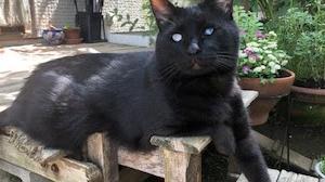 我的夢想是讓貓咪咖啡館+貓咪樂園