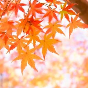 枯葉散落的季節