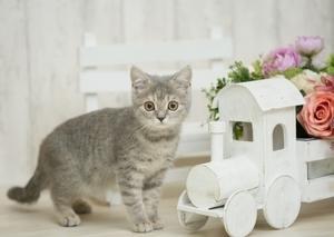 ペット繁殖指導員の資格って何?