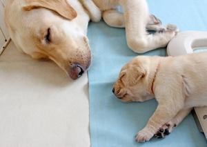 愛玩動物飼養管理士の資格って何?