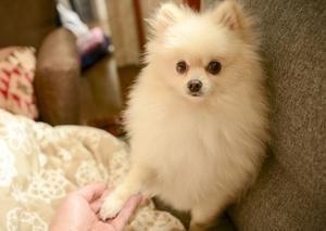 家庭犬トレーナーの資格って何?仕事内容や取得方法を分かりやすくご紹介します!