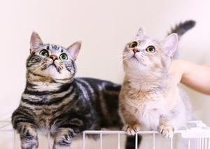 猫の育て方アドバイザー資格って何?