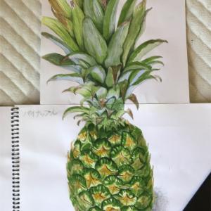 エミータスケッチ90/パイナップル/おうちでパイナップルを育てる方法