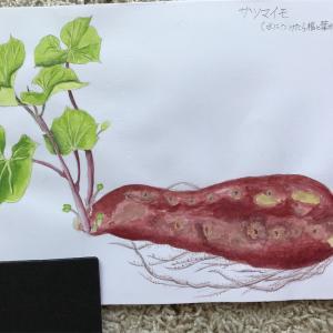 エミータスケッチ81/サツマイモ/ヤモリ