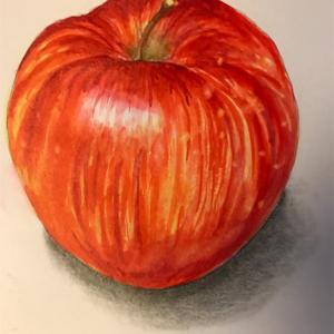エミータS.191/リンゴ/地域共通クーポン