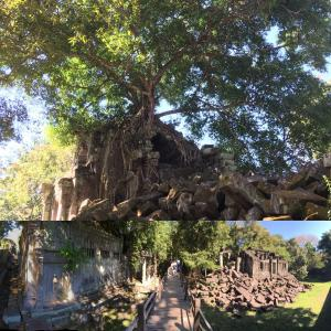 旅記ログ38@密林のベンメリア遺跡