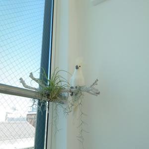大きな窓の安全対策とオウム