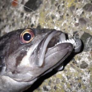 2020/12/12釣行記録 「ダイソーメタルバイブ」入魂ならず...(~_~;) ピンテール系がいい感じ、冬の釣り突入ですかね.....。