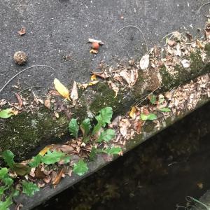 バス停までの道で…大きい秋?見つけた!