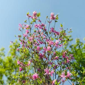 渓流トレッキング後編…展望台の花々と昨年の今頃も…