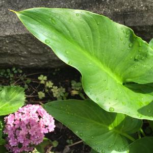 植物に頭が下がる…生命力と譲り合い