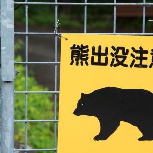 熊さんが出没し過ぎな件