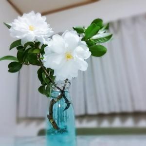花は育てられないけど、飾るのは好き