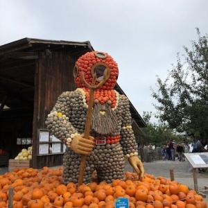 やっと出会えた~日本のかぼちゃ