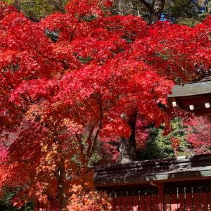 【京都紅葉2020🍁神護寺】今年の京都の紅葉狩り巡る旅🍁