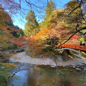 【京都紅葉2020🍁西明寺】美しい朱色の参道橋の先に出会える🍁紅葉寺🍁