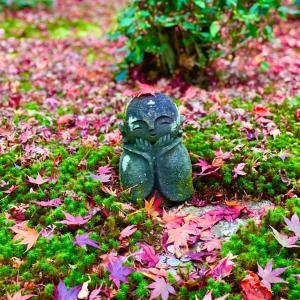 【圓光寺】紅葉🍁と青紅葉🌿と可愛いお地蔵さん💕