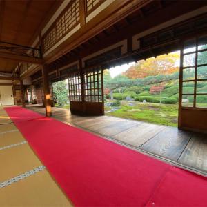 【一華院🍵】東福寺で見つけたとっておきの観光コース⛩