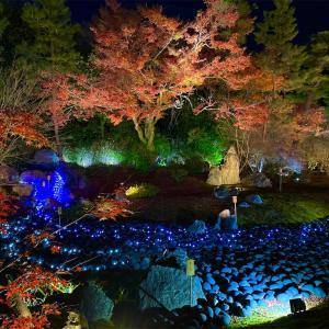 【宝厳院ライトアップ✨】嵐山宝厳院特別拝観🍁2回目訪問ライトアップ最終日✨