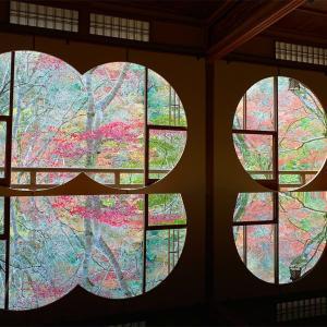【祐斎亭】瑠璃光院の庭師が手掛けた美しい庭園。嵐山の隠れ家的スポット✨
