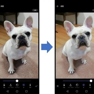 一手間で超かんたんに犬の写真写りを良くする方法
