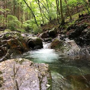 森の隠れ家、釣りと山ごはん part.8 ①