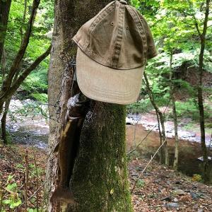 森の隠れ家、釣りと山ごはん part.5