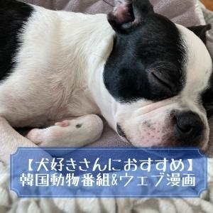 【犬好き必見】おすすめ韓国動物番組&ウェブ漫画