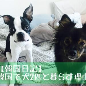 【韓国日記】韓国で犬2匹と暮らす理由