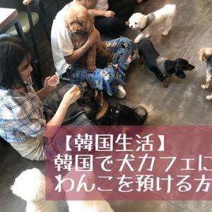 【韓国生活】韓国で犬カフェにわんこを預ける方法