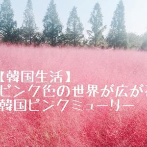 【韓国生活】ピンク色の世界が広がる韓国ピンクミューリー