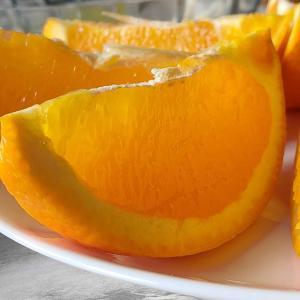 ネーブルオレンジ 見分け方
