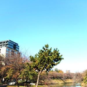 【高級住宅街】九段南