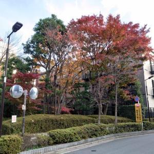 【高級住宅街】赤坂8丁目