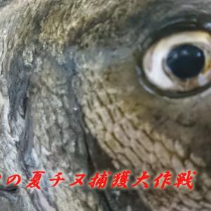 【フカセ釣り】浦ノ内湾の夏チヌ捕獲大作戦