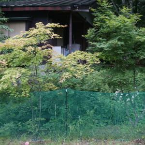 お庭の記録 その2