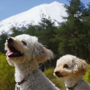 わんこと富士山