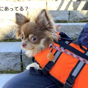 【チョコ旅】紅葉の支笏湖でカヤックにチャレンジ