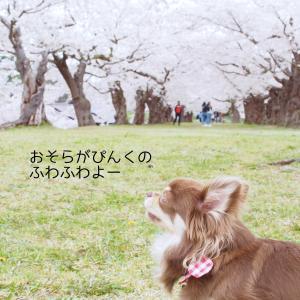 桜の回廊とチョコと迎える二度目の春。