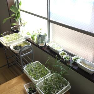 部屋が菜園
