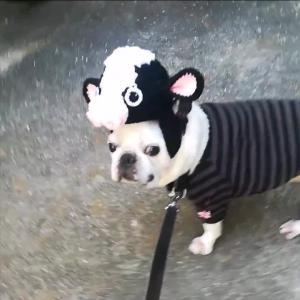パイドはやっぱり牛が似合う