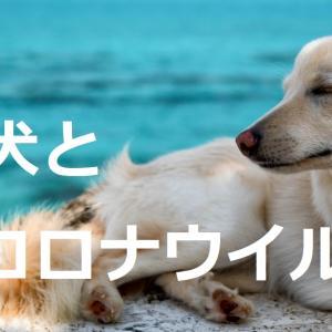 犬がコロナ患者を救う日が来る