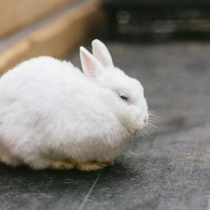 気になるウサギの避妊とその手術の必要性について
