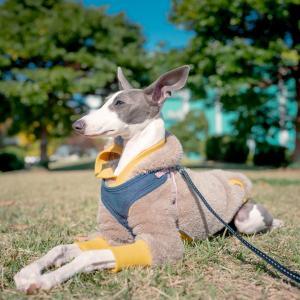 犬フィラリア症とは?予防方法?それって必要?