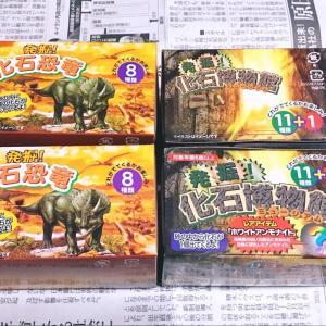 セリアの化石発掘シリーズ、恐竜と博物館をくま夫が買ってきた(笑)とりあえずやってみたよ。