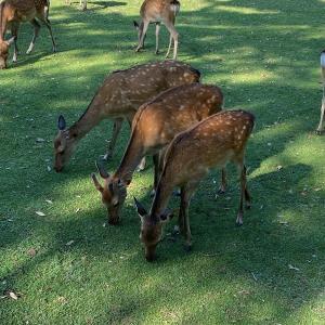 子鹿公園デビュー♬