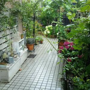 梅雨の庭から